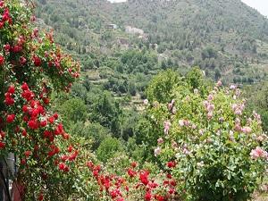 Фестиваль роз на Кипре 2018